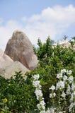 Άσπρα λουλούδια που αυξάνονται μπροστά από τους ηφαιστειακούς βράχους - κόκκινους αυξήθηκε κοιλάδα, Goreme, Cappadocia, Τουρκία Στοκ Φωτογραφίες