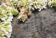 Άσπρα λουλούδια που τακτοποιούνται σε ένα ξύλινο υπόβαθρο σύστασης Στοκ Εικόνα