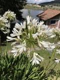 Άσπρα λουλούδια στη λαμπρότητα τους Στοκ εικόνες με δικαίωμα ελεύθερης χρήσης