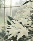 Άσπρα λουλούδια στο βοτανικό κήπο Στοκ εικόνα με δικαίωμα ελεύθερης χρήσης