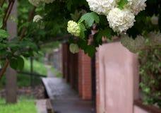 Άσπρα λουλούδια στο θολωμένο υπόβαθρο οδών στοκ εικόνα με δικαίωμα ελεύθερης χρήσης