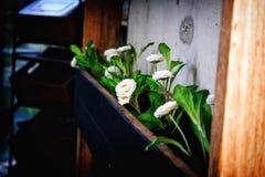 Άσπρα λουλούδια στο κιβώτιο λουλουδιών Στοκ φωτογραφία με δικαίωμα ελεύθερης χρήσης