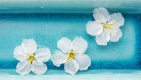 Άσπρα λουλούδια στο μπλε κύπελλο του νερού, SPA, έμβλημα Στοκ Εικόνες