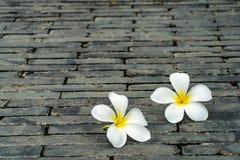 Άσπρα λουλούδια στο πάτωμα Στοκ Φωτογραφία