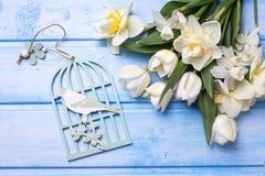 Άσπρα λουλούδια τουλιπών και ναρκίσσων και διακοσμητικό πουλί στο μπλε Στοκ φωτογραφίες με δικαίωμα ελεύθερης χρήσης