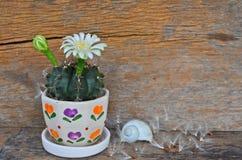 Άσπρα λουλούδια του δοχείου κάκτων στο ξύλινο πάτωμα Στοκ Εικόνες