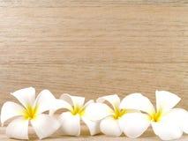 Άσπρα λουλούδια plumeria με το ξύλινο υπόβαθρο τοίχων Στοκ φωτογραφία με δικαίωμα ελεύθερης χρήσης