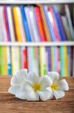 Άσπρα λουλούδια plumeria στο γραφείο Στοκ φωτογραφία με δικαίωμα ελεύθερης χρήσης