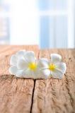 Άσπρα λουλούδια plumeria στο ξύλο Στοκ εικόνα με δικαίωμα ελεύθερης χρήσης