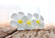 Άσπρα λουλούδια plumeria στο ξύλο Στοκ Φωτογραφία