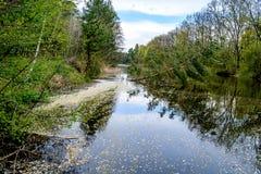 Άσπρα πέταλα στο νερό Στοκ φωτογραφίες με δικαίωμα ελεύθερης χρήσης
