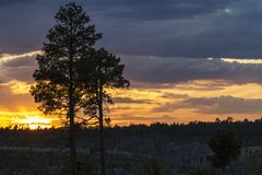 Άσπρα πεύκα Lodgepole που σκιαγραφούνται ενάντια σε ένα ηλιοβασίλεμα της Αριζόνα Στοκ Φωτογραφία