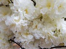 Άσπρα πλαστικά λουλούδια παπαρουνών Στοκ φωτογραφίες με δικαίωμα ελεύθερης χρήσης