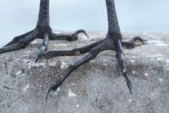 Άσπρα πόδια πουλιών κινηματογραφήσεων σε πρώτο πλάνο γερανών Στοκ Φωτογραφία
