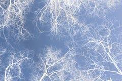 Άσπρα σκιαγραφημένα δέντρα Στοκ Εικόνα
