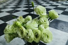 Άσπρα τριαντάφυλλα στα κεραμίδια στοκ εικόνα