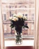 Άσπρα τριαντάφυλλα του Εδιμβούργου Στοκ Φωτογραφία