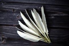 Άσπρα φτερά πουλιών Στοκ φωτογραφία με δικαίωμα ελεύθερης χρήσης