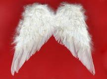 άσπρα φτερά Στοκ Εικόνες