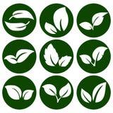 Άσπρα φύλλα σε ένα στρογγυλό πράσινο κουμπί Στοιχεία για το eco και τα βιο λογότυπα εμβλήματα ελεύθερη απεικόνιση δικαιώματος