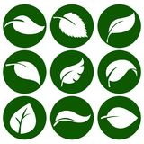 Άσπρα φύλλα σε ένα στρογγυλό πράσινο κουμπί Στοιχεία για το eco και τα βιο λογότυπα διανυσματική απεικόνιση