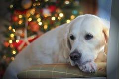 Άσπρα χρυσά Χριστούγεννα Στοκ Εικόνες