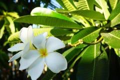 Άσπρα όμορφα λουλούδια μεταξύ των λουλουδιών στοκ φωτογραφίες με δικαίωμα ελεύθερης χρήσης