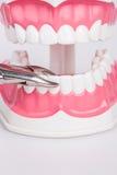 Άσπρα δόντια και οδοντικά όργανα Στοκ Εικόνα