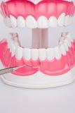 Άσπρα δόντια και οδοντικά όργανα Στοκ εικόνες με δικαίωμα ελεύθερης χρήσης