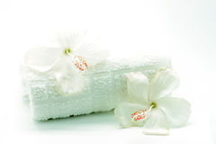 Άσπρα Hibiscus Στοκ εικόνα με δικαίωμα ελεύθερης χρήσης