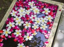 Άσπρα Plumeria και τριαντάφυλλα που επιπλέουν στο νερό Στοκ Εικόνες