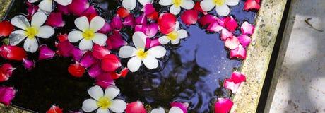 Άσπρα Plumeria και τριαντάφυλλα που επιπλέουν στο νερό Στοκ εικόνα με δικαίωμα ελεύθερης χρήσης
