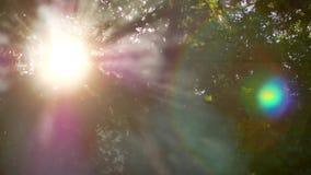 Άσπρες άνοδοι καπνού Πυρκαγιά στα δάση υπαίθρια αναψυχή μεσημερ& νεολαίες ενηλίκων Τα πράσινα φύλλα των δέντρων Υπόβαθρο 4K φιλμ μικρού μήκους