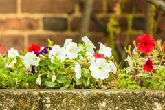 Άσπρες και κόκκινες ανθίζοντας άγρια περιοχές λουλουδιών Στοκ φωτογραφία με δικαίωμα ελεύθερης χρήσης