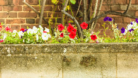 Άσπρες και κόκκινες ανθίζοντας άγρια περιοχές λουλουδιών Στοκ φωτογραφίες με δικαίωμα ελεύθερης χρήσης