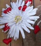 Άσπρες κόκκινες καρδιές λουλουδιών μαργαριτών Στοκ Φωτογραφίες