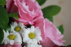 Άσπρες μαργαρίτες και ρόδινα τριαντάφυλλα στο μπεζ υπόβαθρο Στοκ εικόνες με δικαίωμα ελεύθερης χρήσης