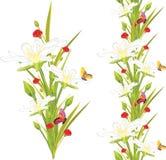 Άσπρες λουλούδια και πεταλούδες άνοιξη στο λευκό Στοκ Εικόνες