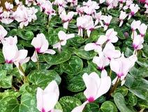 Άσπρες πράσινες εγκαταστάσεις λουλουδιών Στοκ φωτογραφία με δικαίωμα ελεύθερης χρήσης