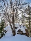 Άσπρες σημύδες στο χειμερινό δάσος στο υπόβαθρο του φωτεινού μπλε ουρανού με τα σύννεφα σε Altai, Ρωσία στοκ εικόνα