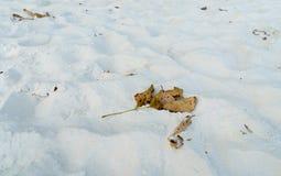 Άσπρη άμμος και ξηρό φύλλο Στοκ Εικόνα