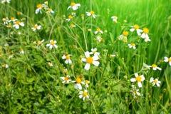 Άσπρη άνθιση λουλουδιών Στοκ εικόνα με δικαίωμα ελεύθερης χρήσης