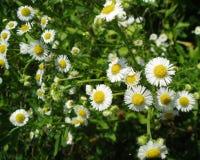 Άσπρη δέσμη λουλουδιών Στοκ Φωτογραφία