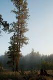 Άσπρη λίμνη Campgrounds, Ουίλιαμς, AZ αλόγων Στοκ Εικόνες