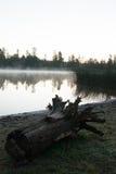 Άσπρη λίμνη Campgrounds, Ουίλιαμς, AZ αλόγων Στοκ Εικόνα