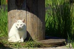 Άσπρη αγροτική γάτα στο ξύλινο στροφίο στοκ εικόνες με δικαίωμα ελεύθερης χρήσης
