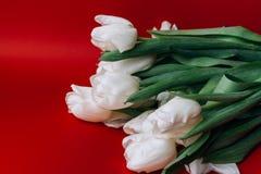 Άσπρη ανθοδέσμη τουλιπών στο κόκκινο υπόβαθρο κόκκινο λευκό Τοπ άποψη με το διάστημα για το κείμενό σας Στοκ Φωτογραφία