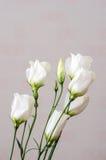 Άσπρη ανθοδέσμη λουλουδιών eustoma Εσωτερικό ρόδινο υπόβαθρο Στοκ φωτογραφίες με δικαίωμα ελεύθερης χρήσης