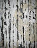Άσπρη αποφλοίωση χρωμάτων από το δάσος Στοκ Εικόνες