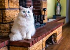 Άσπρη γάτα με τα μπλε μάτια στοκ εικόνες